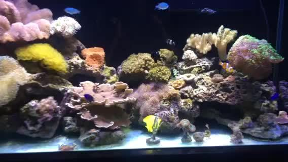 reeftank, Bare Bottom GIFs