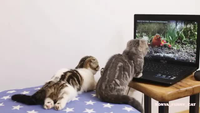Happy Cats, cat, cats, kitten, kittens, Petflix and chill. Join our group: Happy Cats GIFs