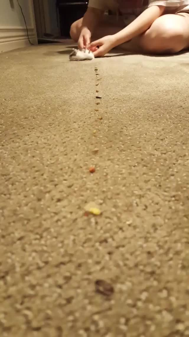 Watch Roomba mini 7.0 GIF by @bheighkeigh on Gfycat. Discover more related GIFs on Gfycat