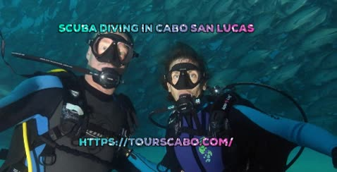 Watch and share Shark In Cabo GIFs by Tours Cabo on Gfycat