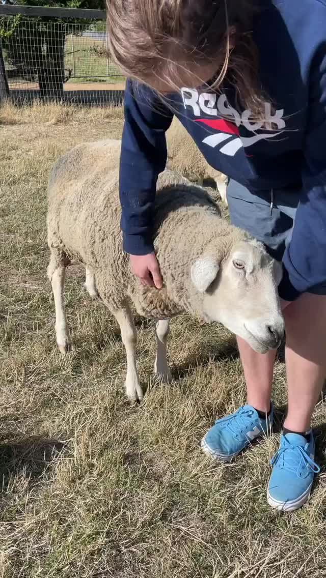 Watch and share Edgars Mission Animal Sanctuary GIFs by b12ftw on Gfycat