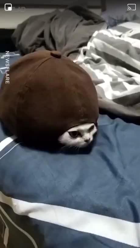 Turtle Cat - gif