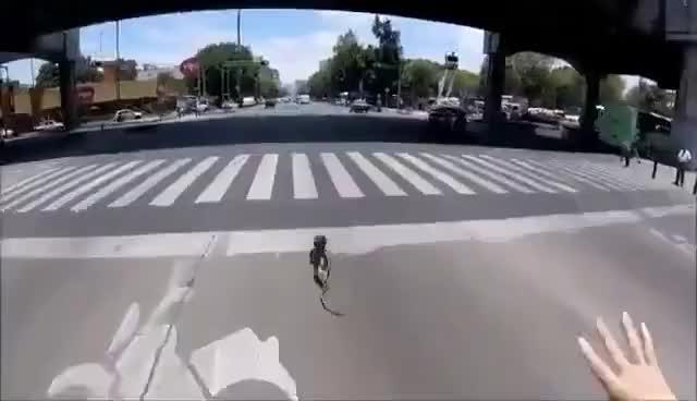 Watch and share Increíble Persecución A Un Perro En Avenida Revolución #CDMX GIFs on Gfycat