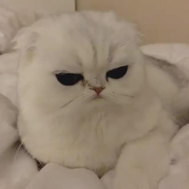 cat, cute, eyes, kitten, Those eyes.. Awwwww <3 GIFs