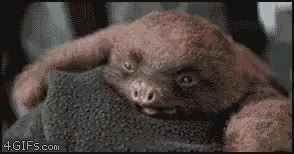 Watch and share Why So Tired You Silly Sloth? (i..com) GIFs on Gfycat