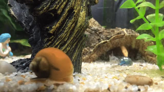Watch Hello Gary! GIF on Gfycat. Discover more aquariums GIFs on Gfycat