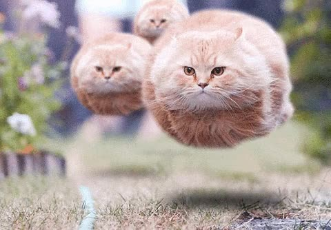 Watch and share Wtf, Soon, Hovercat, Monorailcat GIFs on Gfycat