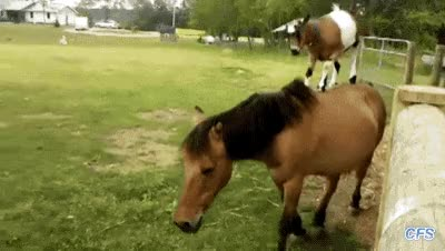 Watch this horse GIF on Gfycat. Discover more related GIFs on Gfycat