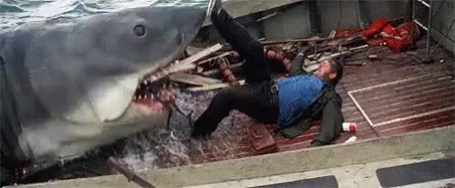 Watch Jaws 1975 GIF on Gfycat. Discover more related GIFs on Gfycat