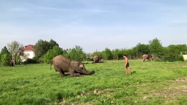 Watch elephant jump GIF on Gfycat. Discover more related GIFs on Gfycat