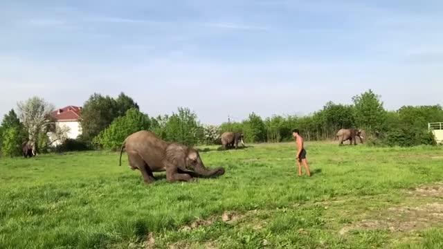 Watch and share Elephant Jump GIFs on Gfycat