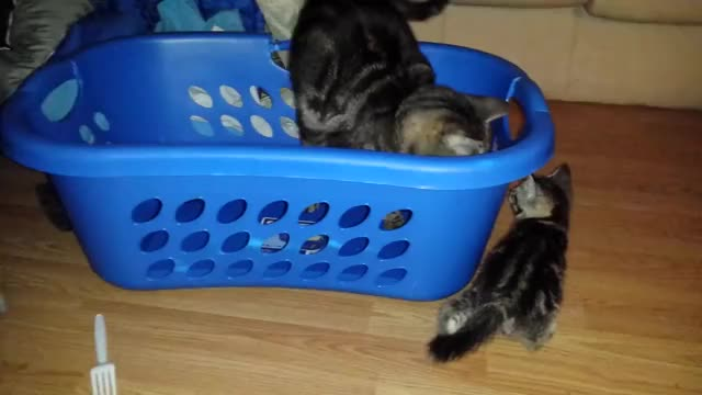 Watch Fuck you, my basket. (x-post /r/AnimalsBeingJerks) (reddit) GIF on Gfycat. Discover more animalsbeingjerks GIFs on Gfycat