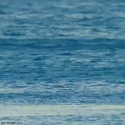 Watch and share Tony Hawk Pro Flipper GIFs on Gfycat