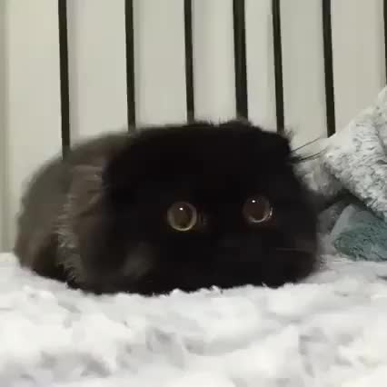 Watch and share Floof GIFs on Gfycat