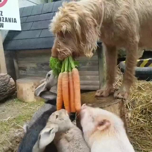 Watch Sharing is caring GIF by JustViral.Net (@justviralnet) on Gfycat. Discover more animals, aww, bunny, cute, dog, justviral.net GIFs on Gfycat