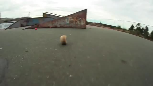Watch Autumn Edit GIF by @reammachine on Gfycat. Discover more skateboarding GIFs on Gfycat