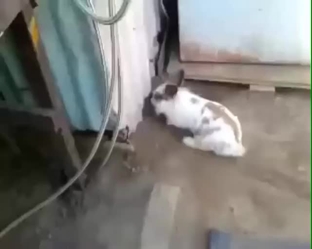 Watch this bunny GIF on Gfycat. Discover more related GIFs on Gfycat