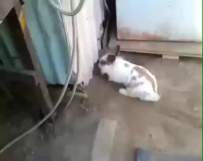 rabbit GIFs