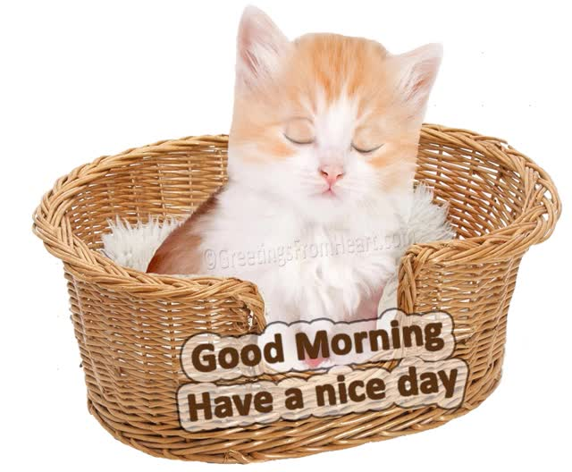 Watch and share Good Morning Have Nice Day Animation GIFs on Gfycat