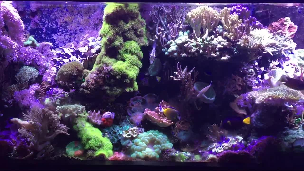 ReefTank, reeftank,  GIFs