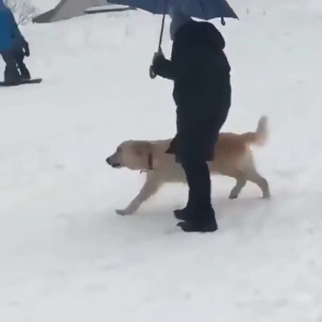 Watch What would we do without dogs? 10/10 good slide, 12/10 good boye. GIF on Gfycat. Discover more hobypopy GIFs on Gfycat