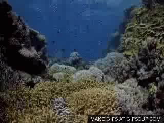 Watch and share Coral GIFs on Gfycat