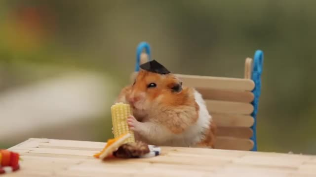 Watch and share Guinea Pig Costume GIFs and Cute Hedgehog GIFs by alohamrhand on Gfycat