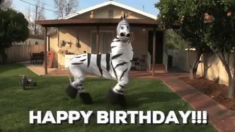bday, birthday, dance, happy bday, happy birthday, zebra, Happy Birthday Zebra GIFs