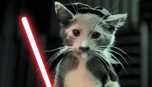 Watch and share Star Wars GIFs and Cats GIFs on Gfycat