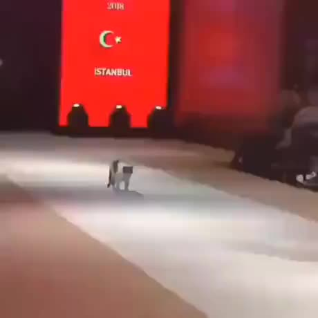 Cat steals the show