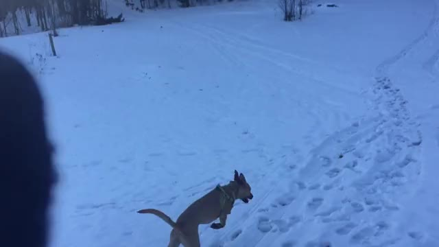 Watch First time off the leash zoomies GIF on Gfycat. Discover more Zoomies GIFs on Gfycat