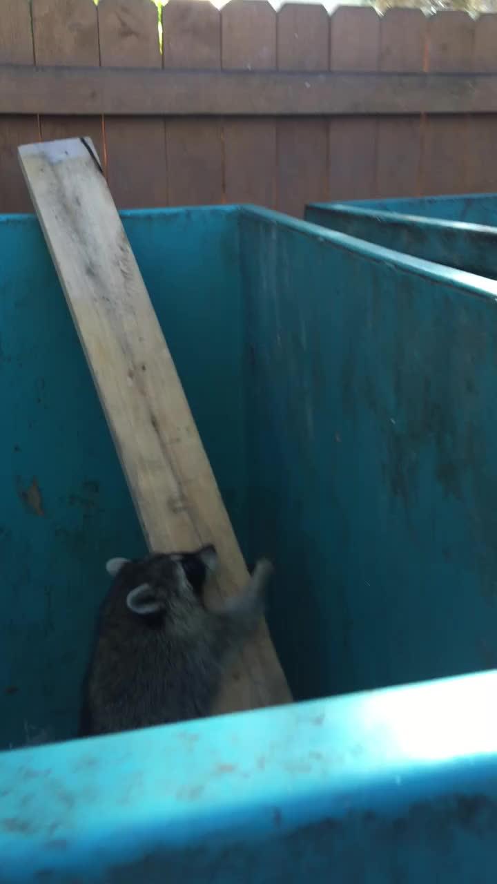 therewasanattempt, trashpandas, yesyesyesno, Fatty raccoon GIFs