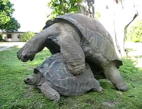 sex, turtle, Turtle GIFs