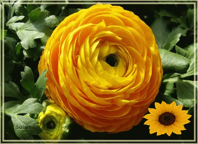Watch and share Gif Flower GIFs and Gif Flor GIFs by Susan on Gfycat
