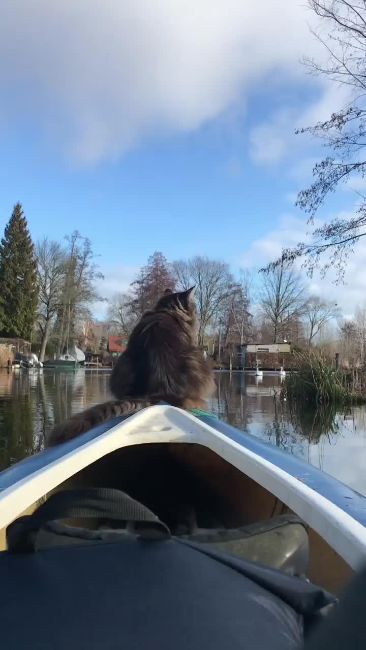 Louiswildlife, Maine Coon cat 🐈 kayaking GIFs