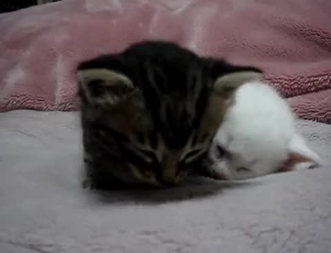 Watch and share Falling Asleep | Cat Falling Asleep Animated GIF | GIFs GIFs on Gfycat