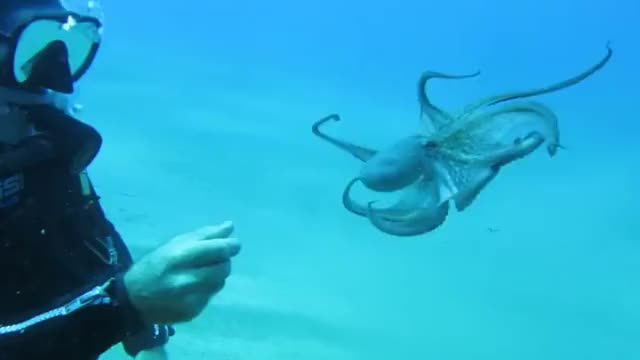 Watch and share Octopus GIFs by julieeea on Gfycat