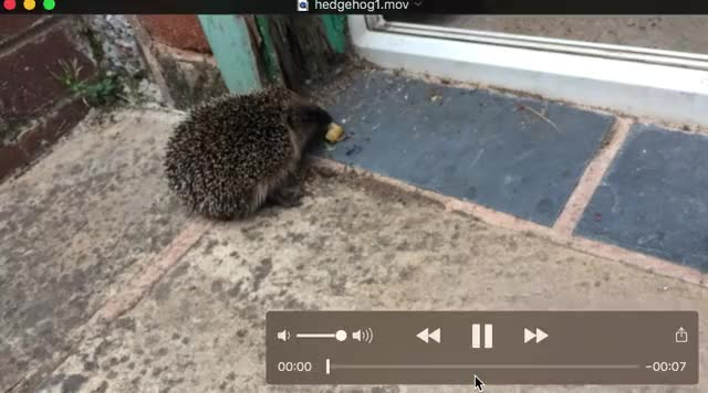 Watch hedgehog GIF on Gfycat. Discover more related GIFs on Gfycat