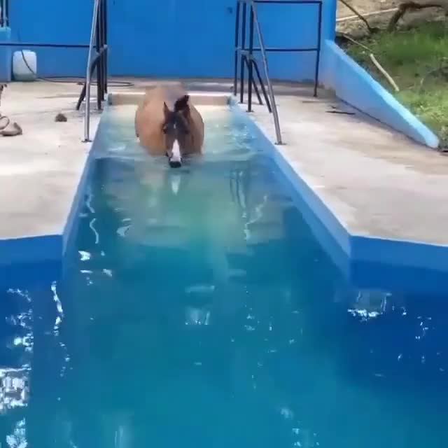 Watch and share Horse Lap Pool GIFs by PM_ME_STEAM_K3YS on Gfycat