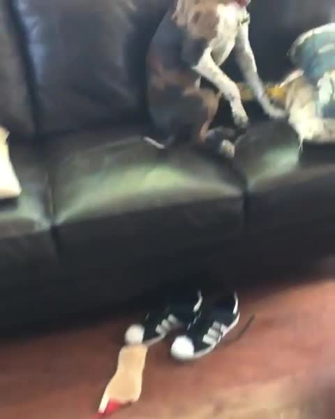 guiltydog, ms. peanut butter (mpb, msp), heckin guilt GIFs