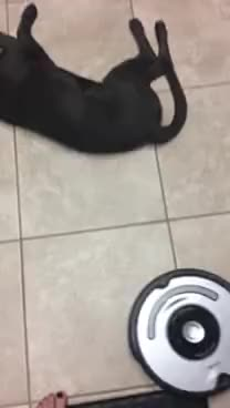 Watch and share Roomba GIFs on Gfycat