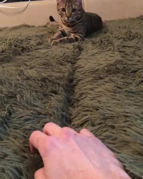 Watch and share Cat GIFs by PracticalProperty on Gfycat