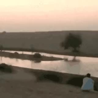 Watch and share Cheetah Vs. Human • R/RIPgifs GIFs on Gfycat