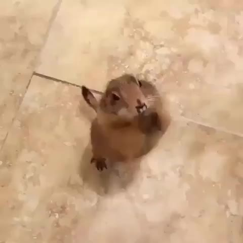 cute, animal, funny, If you're happy and you know it GIFs