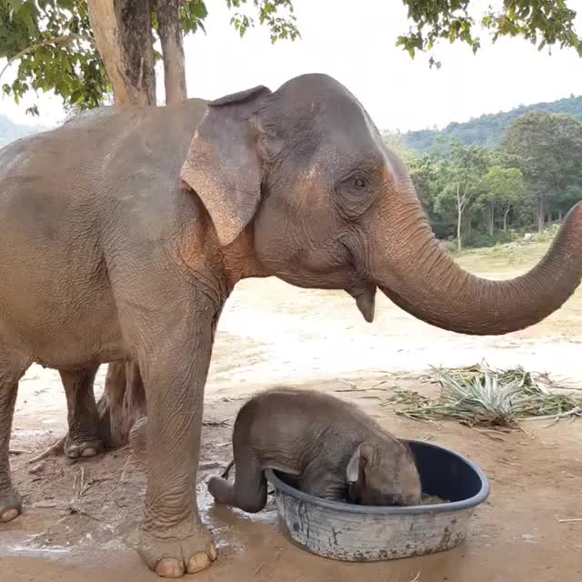 Watch and share Notrekking GIFs and Elephants GIFs by vani  on Gfycat