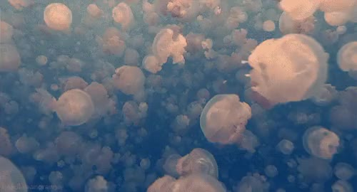 Watch jellyfish GIF on Gfycat. Discover more related GIFs on Gfycat