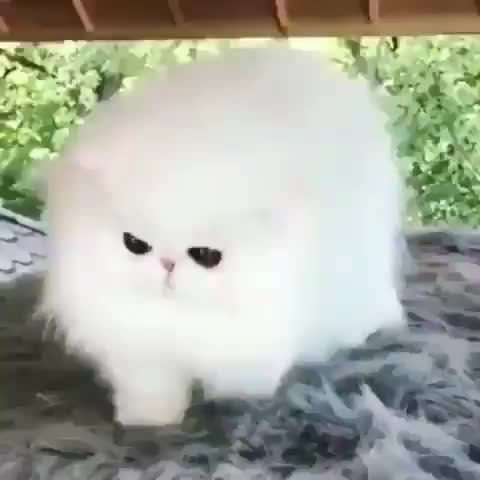 Watch and share Hypnotizing A Ball Of Cotton GIFs by tothetenthpower on Gfycat