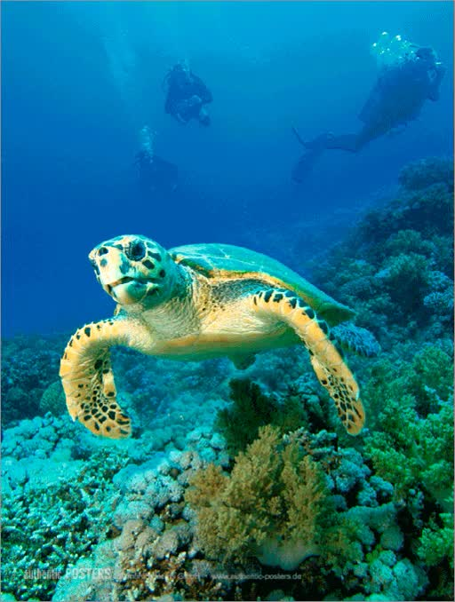 Watch and share Hawksbill Turtle GIFs on Gfycat