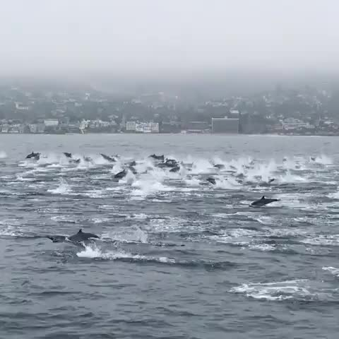 Watch and share Dolphins GIFs and Nature GIFs on Gfycat