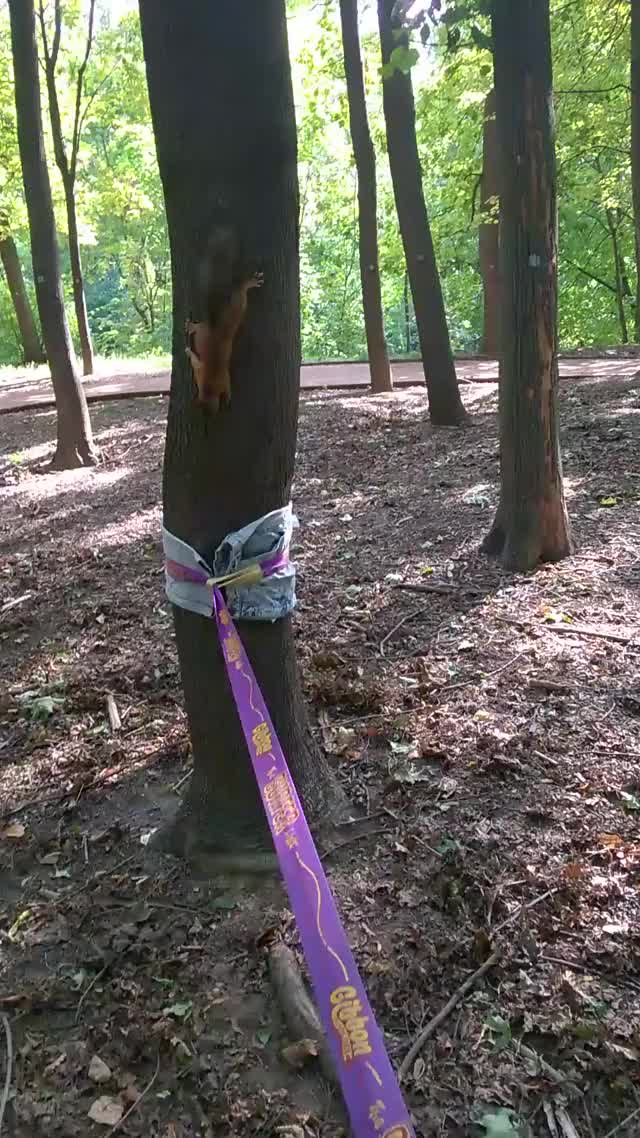 Watch and share Slackline GIFs on Gfycat